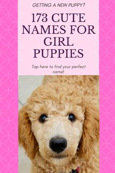 Finding the perfect name for your new puppy can prove to be a very daunting task. These 173 suggestions just may have the perfect one for your new little girl!