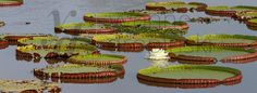 Brazylia - Pantanal