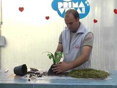 How to do a Kokedama, nice idea for a succulent. Como hacer un kokedama, una muy buena idea para plantar suculentas