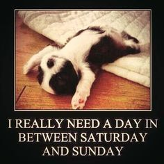 Funny jokes for today we all need to laugh . Hope at least one made you laugh. Dog Memes, Funny Memes, Funniest Memes, Funny Sunday Memes, Saturday Memes, Tgif Funny, Friday Funnies, Funny Weekend, Dog Humor