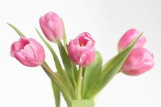 Did you know start to wither 48 hours after being cut? Here, Ella shares tips for enjoying them longer! Collage, Garden Styles, Flourish, Gardening Tips, Pretty In Pink, Tulips, Bouquets, Floral Design, Friendship