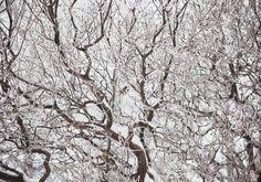 Branches, 2010 by Jaana Rannikko. Pigment print, image size 70 x 100 cm, edition 1/5 + 2AP. Price 1300€, inquiries sari.seitovirta@seitsemanvirtaa.com. Helsinki, Branches, Contemporary Art, Art Pieces, Sculptures, Sari, Painting, Outdoor, Image
