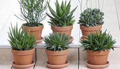 Ønskeskyen - Inspiration - Planter
