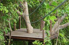Zipline Adventures with the Aerial Trek through the trees in Barbados