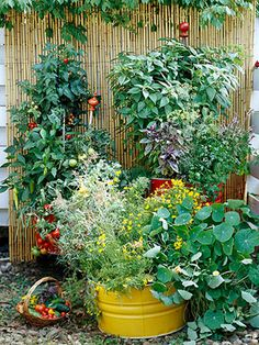Container Gardening, Vegetable Garden