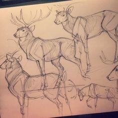 4,445 отметок «Нравится», 8 комментариев — Jonathan Kuo (@jonnadon1) в Instagram: «After dinner sketches, deer studies #sketch #cottonwoodarts #sketchbook #animal #animasketch…»