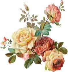Victorian Flowers, Vintage Flowers, Vintage Floral, Pink Flowers, Floral Theme, Arte Floral, Botanical Flowers, Botanical Prints, Flower Prints