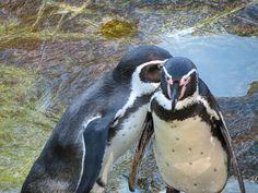 TIERGARTEN SCHÖNBRUNN #pinguine #zoo #wien #österreich #sightseeing #sehenswürdigkeiten