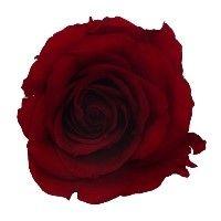 Hoa hồng đỏ tươi ướp khô Đà Lạt
