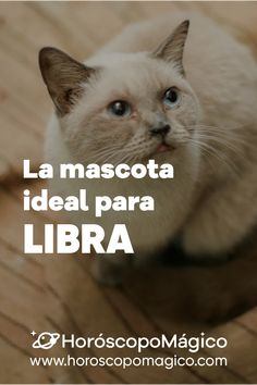 ¡LIBRA, esta es tu mascota ideal! porque no todos tenemos en mismo carácter y no a todos nos gustan las mismas mascotas ¡Haz clic en la imagen para consultar tu predicción de HOY gratis! #libra #mascotaperfecta #mascotas #prediccionlibra