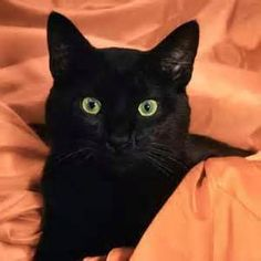 black cats - Bing Images