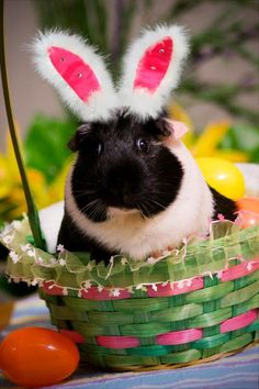 Photo of the Wheek! Contest: Easter Pigs!