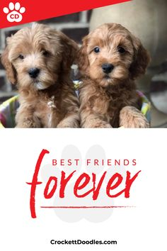 Dog Lover Quotes from Crockett Doodles Puppies And Kitties, Cute Puppies, Cute Dogs, Doggies, Cute Baby Animals, Animals And Pets, Funny Animals, Dog Lover Quotes, Dog Lovers