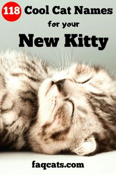 113 Best Cat Names images in 2019 | Funny cat names, Funny