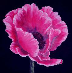 Pink Poppy Painting  - Pink Poppy Fine Art Print