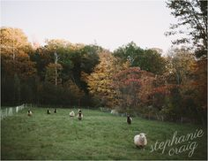 Massachusetts Engagement Session // Fall Foliage // Western Massachusetts // Blue Outfits // New England