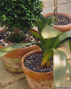 Pebble Pots   Martha Stewart Living - Potted plants add a lush swatch of green to a room, but the soil they grow in has never done much for any decor.