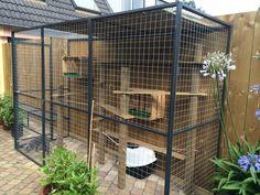 Outdoor Cat Run, Diy Cat Shelves, Cat Habitat, Cat Kennel, Cat Cages, Pet Hotel, Cat Playground, Animal Room, Cat Enclosure