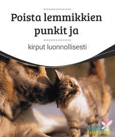 Poista lemmikkien punkit ja kirput luonnollisesti   Kissat ja koirat saattavat tuoda kotiin mukanaan #kutsumattomia vieraita, jotka vaikuttavat #lemmikkien lisäksi #omistajiin. Punkit ja kirput ovat inha vaiva.  #Mielenkiintoistatietoa