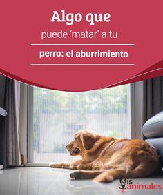 Algo que puede 'matar' a tu perro: el aburrimiento Los gestos y actitudes instintivas forman la personalidad y el carácter de un perro y hacen su vida más feliz. Impedírselo puede desembocar en aburrimiento. #matar #perro #salud #aburrimiento