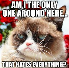 Grumpy Cat Quotes, Funny Grumpy Cat Memes, Funny Animal Memes, Funny Cats, Funny Animals, Cute Animals, Funny Jokes, Here Kitty Kitty, Kitty Cats