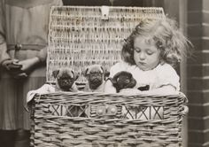 Being vintage is fun. (pug puppies 1932 by harold tomlin)