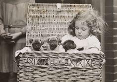 Being vintage is fun. (pug puppies 1932 by harold tomlin)