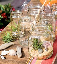 Do It Yourself sand terrariums with air plants