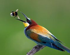 The perfect timing and Bird catches the bee. | Most Beautiful Pages