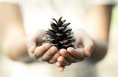 #photography #pinecone