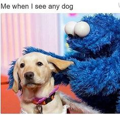 """37 Amusing Memes To Help Cure Your Sunday Blues - Funny memes that """"GET IT"""" and want you to too. Get the latest funniest memes and keep up what is going on in the meme-o-sphere. Animal Memes, Funny Animals, Cute Animals, Baby Animals, Lol, Dog Memes, Funny Memes, Funny Dogs, Cute Dogs"""