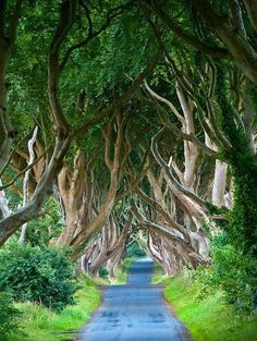 The Dark Hedges, Northern Ireland - 101 Most Beautiful Places You Must Visit Before You Die! – part 2