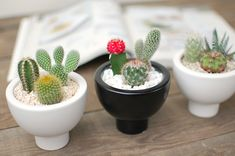 saboten-s | Rakuten Global Market: [Cactus and Succulents of three group of planting / リトルディープ ball]