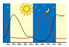 Regulating Circadian Rhythm (and why that's important) - The Paleo Mom  Helps with shift sleeping