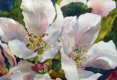 Apple Blossoms, Yvonne Hemingway #watercolor jd