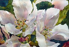Apple Blossoms, Yvonne Hemingway #watercolor jd