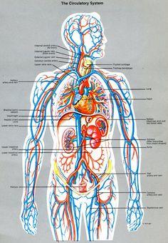 Anatomy Art, Human Anatomy, Rabbit Anatomy, Forensic Artist, Basic Anatomy And Physiology, Nursing Books, Human Body Systems, Crush Pics, Medical Anatomy