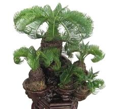 ●☺A little #bonsai inspiration for today!֍♦ #BonsaiInspiration
