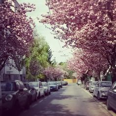 Frühling in Wien 😊 #wien #vienna #springinvienna #spring #loveit #igersvienna #kirschbaum #cherrytree #döbling Sidewalk, Snow, Outdoor, Cherry Tree, Outdoors, Side Walkway, Walkway, Outdoor Games, The Great Outdoors