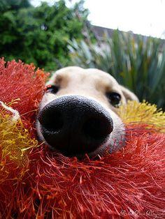 I don't care what kind of day you've had; a dog can always make you smile.