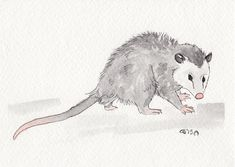 Opossum by IckyDog on DeviantArt   5X7, watercolor and ink