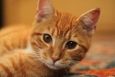 What is #Feline Environmental Enrichment? #cats #catlovers