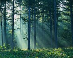 forest with sun bleeding in