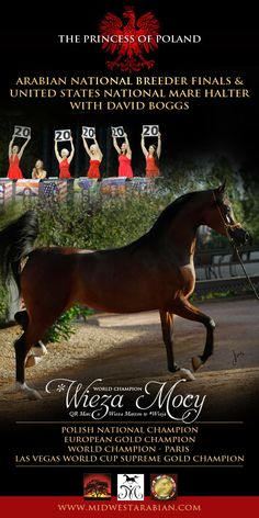 World Champion *Wieza Mocy to compete in United States National Mare Halter :: Arabian Horses, Stallions, Farms, Arabians, for sale - Arabia...