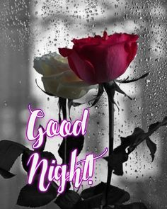 Good Night Image, Good Night Quotes, Neon Signs, Beautiful, Good Night Messages, Be Nice, Good Nite Images