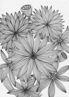 Zendoodle, flowers, aster