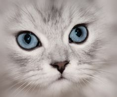 Sweet Cat Face with bright eyes
