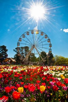 "travelmanposts: "" Floriade 2010 - Canberra, Australia Floriade is an annual month-long celebration of spring in the heart of Australia's capital. Almost visitors flock to Canberra during. Australia Capital, Western Australia, Australia Travel, Places To Travel, Places To See, Australian Capital Territory, Photo D Art, Photos, Pictures"