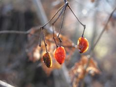 autumn, fall, herbst Autumn Fall, Wind Chimes, Outdoor Decor, Home Decor, Pictures, Decoration Home, Room Decor, Home Interior Design, Home Decoration