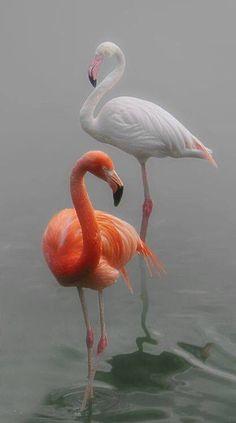 2 shades of pink flamingos